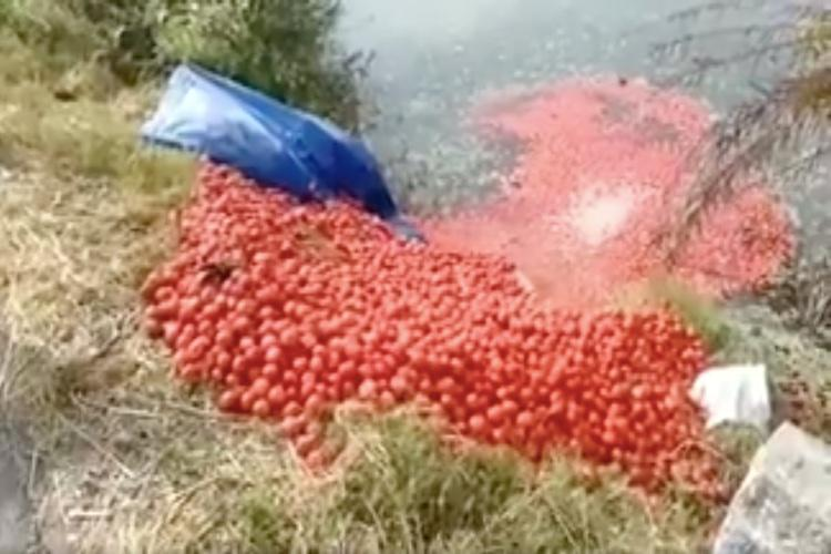 tomatoes dumped in lakes