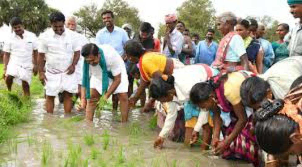 Edapady Palanisamy to plant seedlings in the field with the farmers