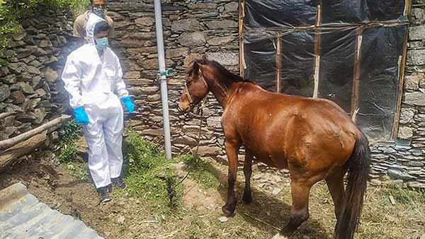horse quarantined in kashmir for carrying its owner 3 1590640563